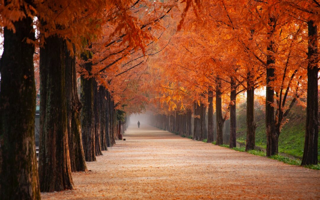 5 Top Health Tips for Autumn